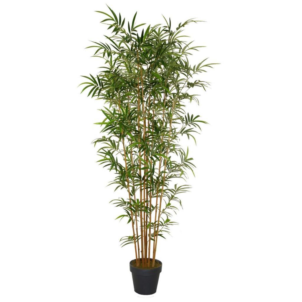Vacchetti pianta ornamentale bamb 230cm cod 3329 for Pianta bambu prezzo